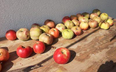 Der Apfel: Vom Leben und Tod